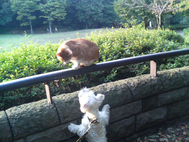 ハマ猫対ハマ犬